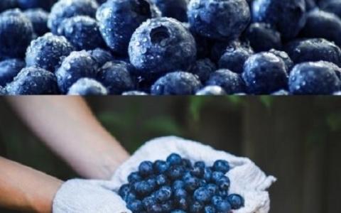6 loại trái cây thông thường tốt cho sức khỏe ít ai biết