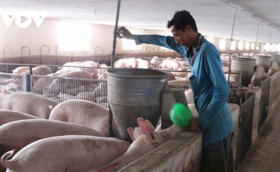 Giá thịt lợn tiếp tục giảm
