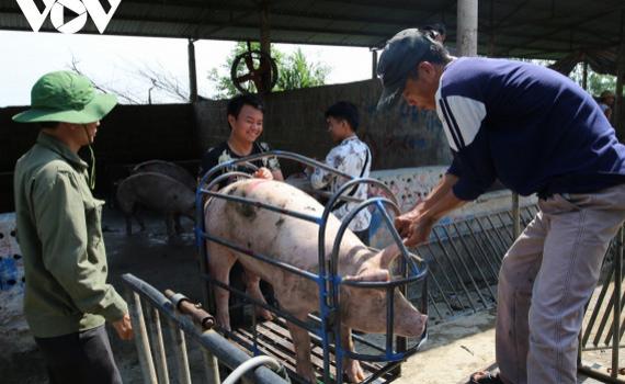 Phê duyệt chiến lược phát triển chăn nuôi giai đoạn 2021-2030