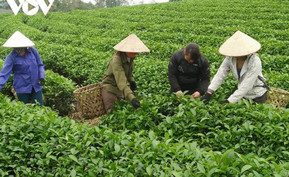 Tăng cường hỗ trợ nông dân sản xuất sản phẩm nông nghiệp hữu cơ