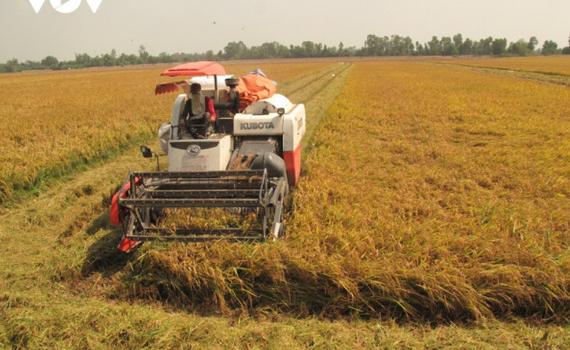 Được mùa, được giá - niềm vui ở vựa lúa miền Tây