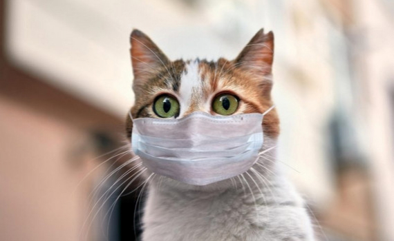 Ca lây nhiễm Covid-19 đầu tiên ở thú cưng tại Hàn Quốc