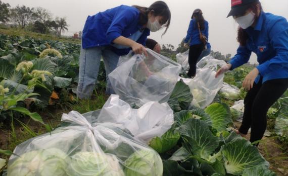 Gỡ khó trong lưu thông hàng hóa, tiêu thụ nông sản vùng dịch