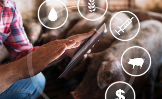 Smartphone gặp khó, Huawei chuyển sang công nghệ… chăn nuôi lợn