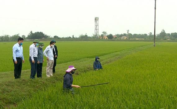 Lãnh đạo Sở NN&PTNT kiểm tra phòng trừ dịch hại trên lúa Đông Xuân