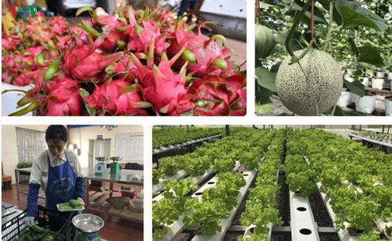 Trung Quốc dẫn đầu về thị trường xuất khẩu rau quả quý I của Việt Nam