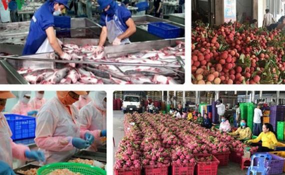 Xuất khẩu nông sản sụt giảm do hàng loạt đơn hàng bị hoãn/hủy
