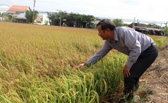 Chống sinh vật gây hại lúa Đông Xuân