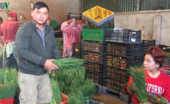 Tổ hợp tác sản xuất rau sạch mỗi tháng thu hàng trăm triệu đồng
