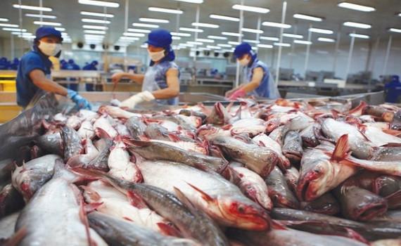 Doanh nghiệp xuất khẩu cá tra kỳ vọng nhiều vào EVFTA
