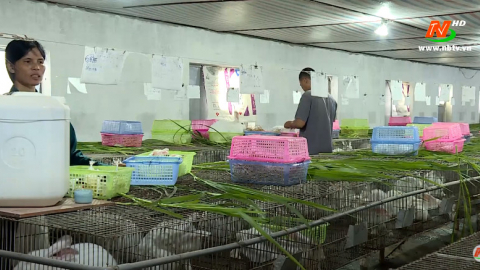 Bạn nhà nông: Kỹ thuật chăn nuôi thỏ sinh sản