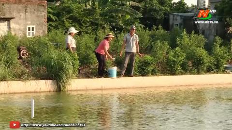 Bạn nhà nông: Kỹ thuật nuôi cá chạch sụn