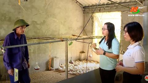 Bạn nhà nông: Kỹ thuật úm gà