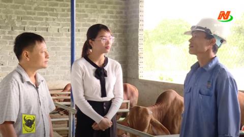 Bạn nhà nông: Kỹ thuật vỗ béo bò thịt