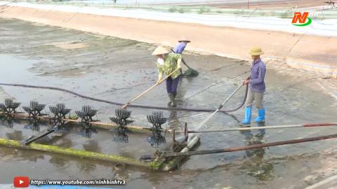 Bạn nhà nông: Kỹ thuật xử lý ao đầm nuôi thả thủy sản nước lợ