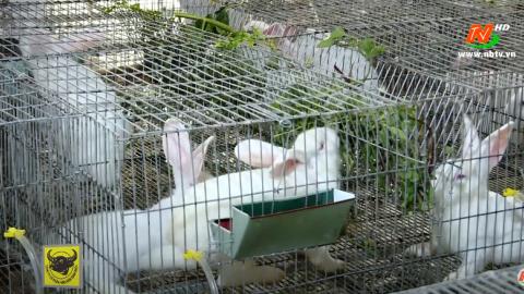 Bạn nhà nông: Một số biện pháp nâng cao hiệu quả chăn nuôi thỏ