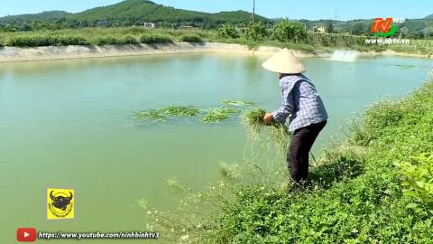 Bạn nhà nông: Phòng chống rét cho con nuôi thủy sản.