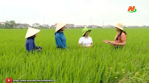 Bạn nhà nông: Phòng trừ sâu bệnh cuối vụ cho lúa đông xuân