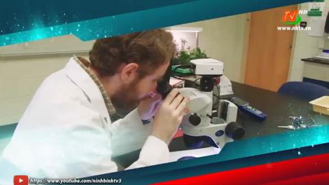 Bệnh dịch hạch và bệnh nhiễm xoắn khuẩn Leptospirosis