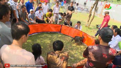 Các trò chơi dân gian tại Lễ hội Hoa Lư hấp dẫn du khách