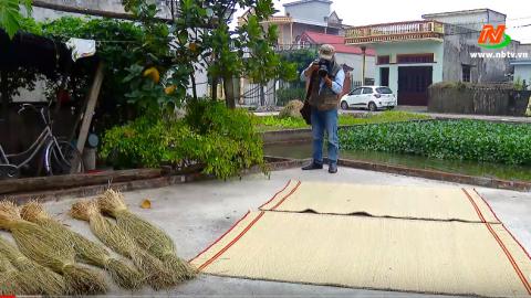 Đất và Người Hoa Lư: Cây cói trên miền quê Kim Sơn