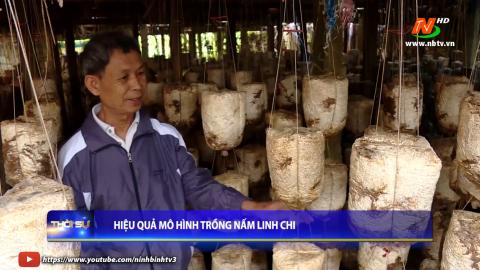 Hiệu quả mô hình trồng nấm linh chi