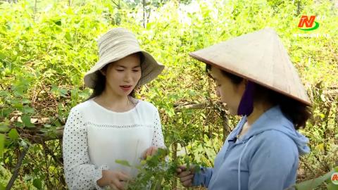 Khoa học kỹ thuật và Công nghệ: Bảo tồn gen và phát triển cây dược liệu tại Ninh Bình