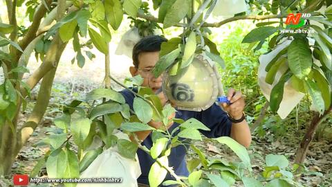 Khoa học kỹ thuật và Công nghệ: Kỹ thuật trồng và chăm sóc bưởi da xanh
