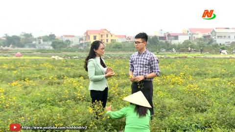 Khoa học kỹ thuật và Công nghệ: Kỹ thuật trồng và chế biến hoa cúc chi