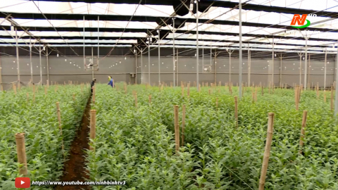 Khoa học kỹ thuật và Công nghệ: Ứng dụng Công nghệ cao trong sản xuất Nông nghiệp