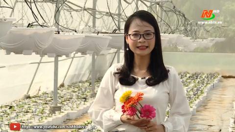 Khoa học kỹ thuật và công nghệ: Ứng dụng công nghệ trong trồng hoa đồng tiền