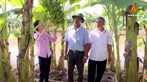 Khoa học kỹ thuật và Công nghệ: Ứng dụng KHKT trồng và thâm canh cây chuối Tây tại xã Xuân Chính