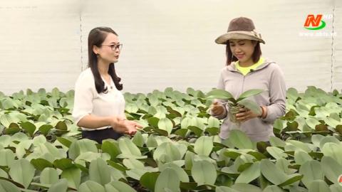Khoa học kỹ thuật và công nghiệp: Kỹ thuật trồng lan Hồ Điệp