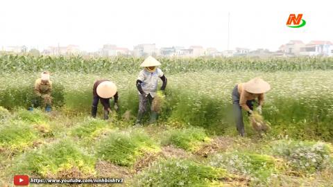 Kinh tế tập thể - Nâng cao giá trị nông sản