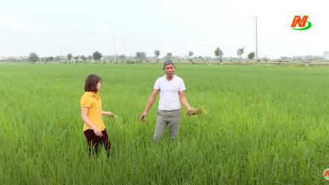 Những vấn đề cử tri quan tâm: Đẩy mạnh phòng, chống dịch hại trên lúa mùa