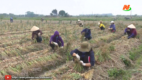 Những vấn đề cử tri quan tâm: Khắc phục khó khăn trong tiêu thụ nông sản