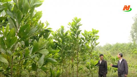 Những vấn đề cử tri quan tâm: Tập trung trồng và bảo vệ rừng