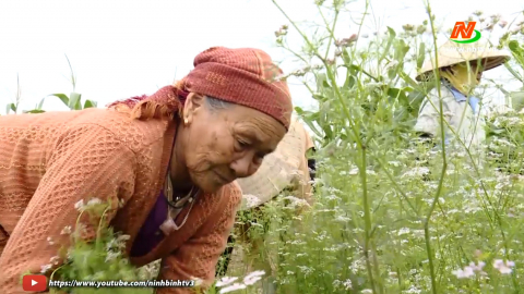 Niềm vui lao động của cụ bà 81 tuổi