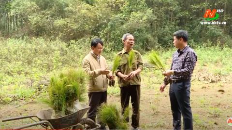 Ninh Bình tăng cường bảo vệ và phát triển rừng