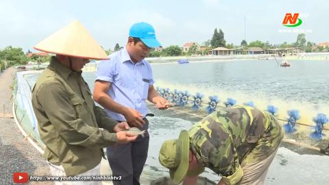 Nông thôn mới: Kim Sơn nâng cao tiêu chí thu nhập trong xây dựng Nông thôn mới
