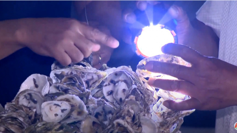 Phóng sự: Kỹ thuật nuôi hàu giống