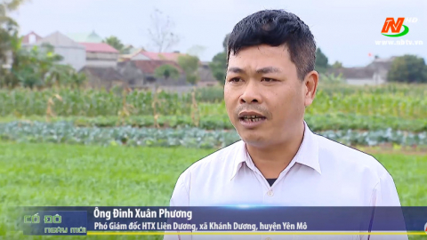 Sản xuất nông nghiệp theo hướng hàng hóa tạo sản phẩm an toàn và mang lại giá trị kinh tế cao