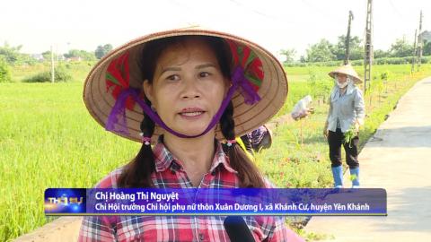 Thời sự Trưa NinhBinh TV - 15/09/2020