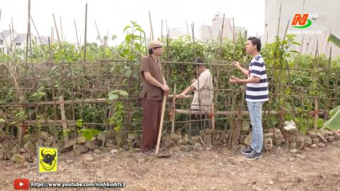 Tuyệt chiêu nhà nông: Bệnh xoăn lá cây cà chua - Ưu điểm phương  pháp trồng thủy canh và nhiệt độ