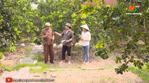 Tuyệt chiêu nhà nông: Chăm sóc cây bưởi ra quả non - Thủy canh tĩnh