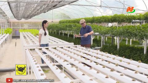 Tuyệt chiêu nhà nông - Tập 32: Cách trồng rau thủy canh theo tầng; Vì sao rau hữu cơ siêu sạch