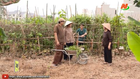 Tuyệt chiêu nhà nông_Tập 40: Bệnh thán thư cây cà chua. Chế biến trái cây thành thuốc trừ sâu.