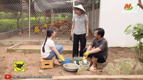 Tuyệt chiêu nhà nông_Tập 41: Sử dụng chế phẩm sinh học trong chăn nuôi gà. Tự làm phân bón hữu cơ.