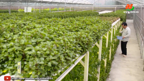 Tuyệt chiêu nhà nông_Tập 42: Sử dụng đèn led trong trồng rau thủy canh. Bệnh héo xanh cây cà chua.