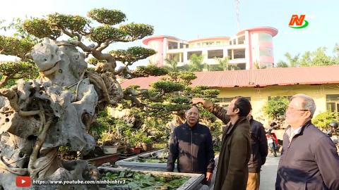 Văn hóa và đời sống: Nét đẹp văn hóa trong thú chơi cây cảnh